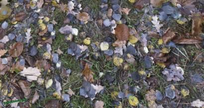 HD текстуры листвы